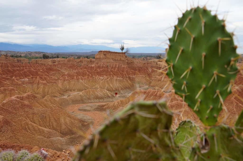 Kakteen und rote Wüstenlandschaft