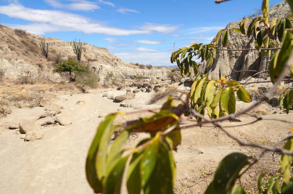 Die graue Landschaft der Tatacoa Wüste