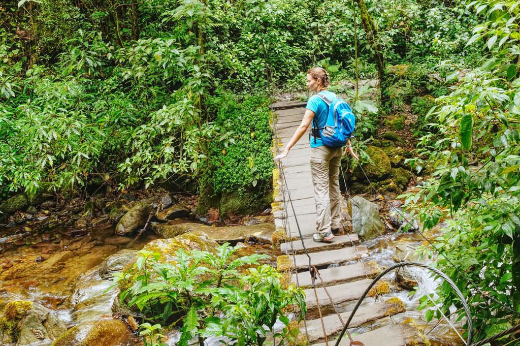 Die vertrauenserweckenden Brücken im Valle de Cocora