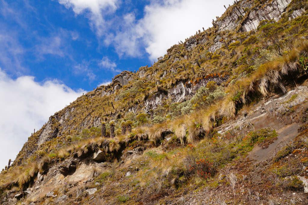 Felsige Paramo Landschaft im Parque Nacional Los Nevados Kolumbien