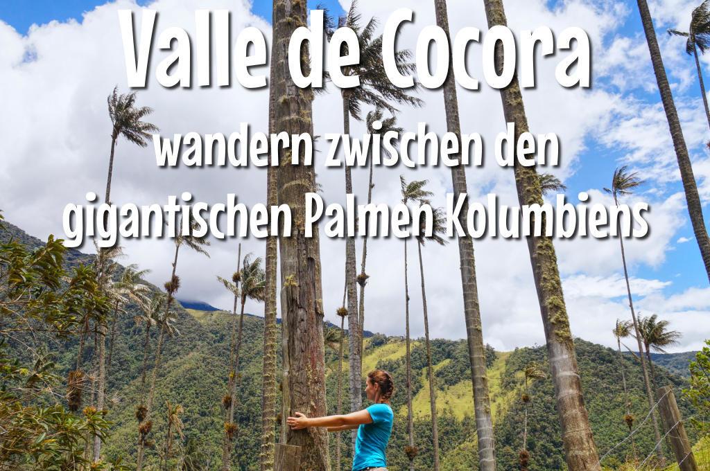 Bei den Wachspalmen im Valle de Cocora