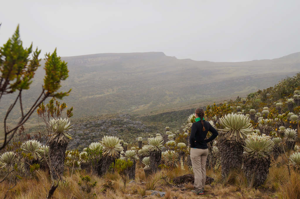 Frailejones und Paramo-Landschaft