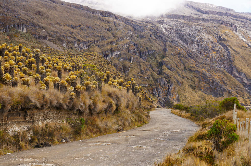 Straße im Parque Nacional Los Nevados