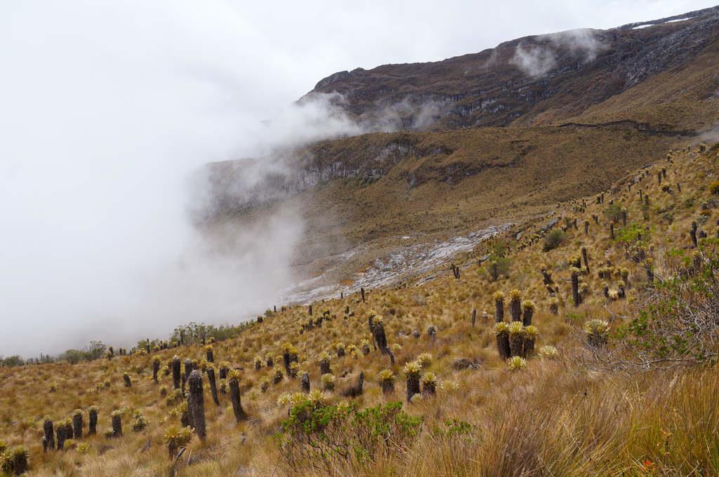 Paramo Landschaft in Kolumbien im Parque Nacional Los Nevados