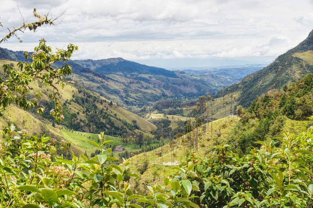 Ausblick auf das Valle de Cocora