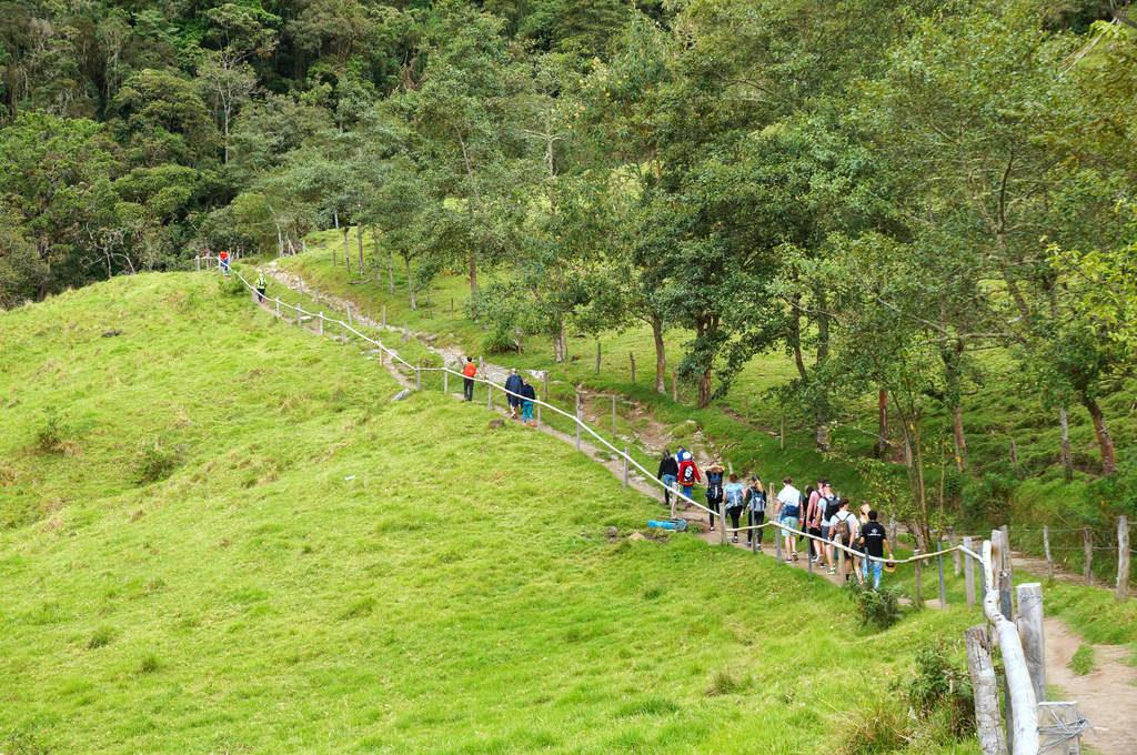 Wandern im Valle de Cocora
