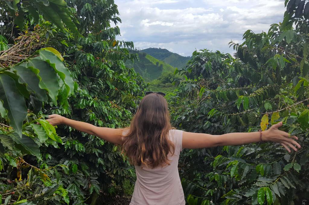 Auf einer Kaffeefarm bei Manizales in Kolumbien