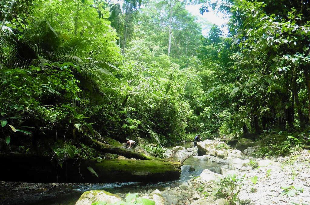 Fluss im Darien Dschungel