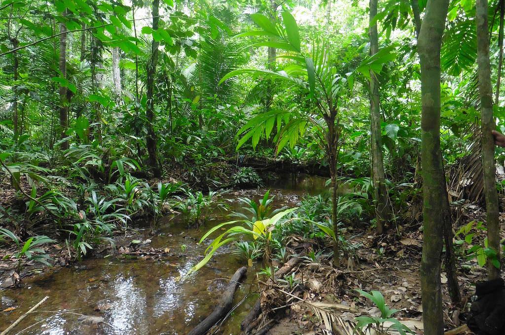 Fluss im Darien Dschungel zwischen Kolumbien und Panama